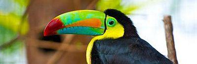 Infobild Costa Rica Rundreisen