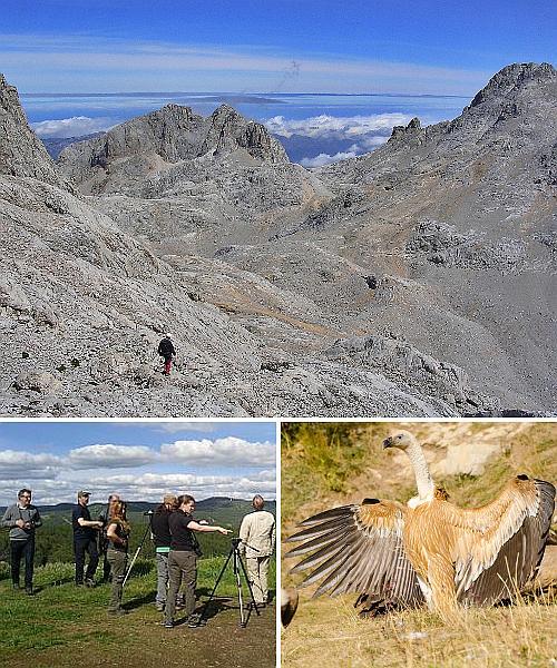 Bildergalerie Birdwatching Picos de Europa