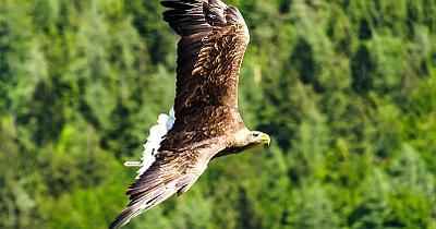 Birdwatching Naturpark Cazorla
