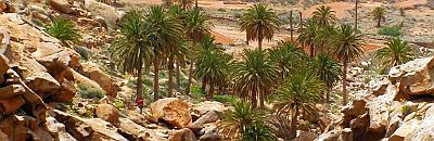 Infobild Fuerteventura